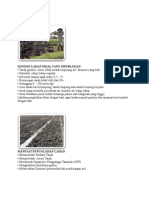 Teknologi budidaya jagung