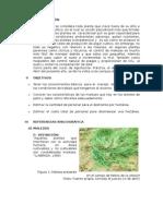 4to Informe - Control de Malezas - PALTO
