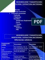 Microbiologia Tema 1 Estructura Bacteriana