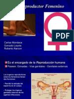 Aparato Reproductor Femenino 2