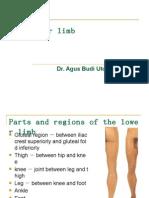 The Lower Limb
