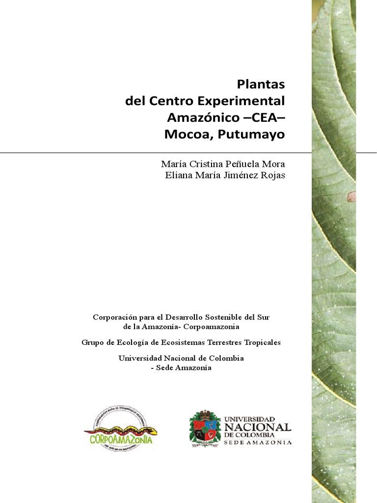 Gallinazo cabeza roja reproduccion asexual de las plantas