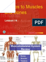 Injuries to Muscels and Bones