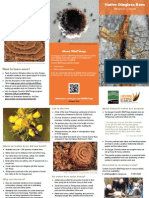 Native Bees Tetragonula Brochure 2014
