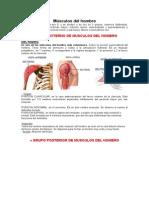 Músculos del hombro expo.docx