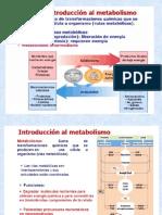 Metabolismo explicacion detallada