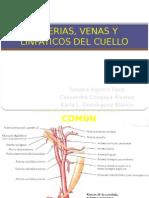 Arterias, Venas y Linfas Del Cuello