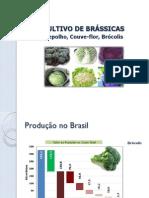 Cultivo de Brássicas 2015