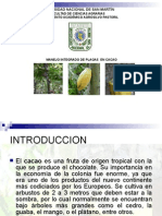 Mip Cacao Copia 150413072451 Conversion Gate01