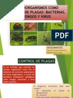 Microorganismos Como Control de Plagas