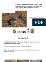 Presentation Tesis Chorlito e Influencia