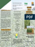 Tecnologia para la produccion de sorgo forrajero.pdf