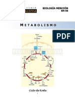 BM08 Metabolismo