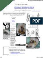 Apertura de Acceso y Morfología Dentaria en Molares