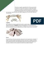 12 temas sobre materia y 9 imagenes.docx