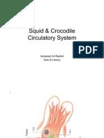 Squid and Crocodile Circulatory System
