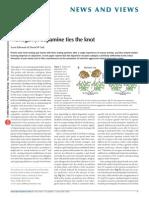 Monogamy Dopamin
