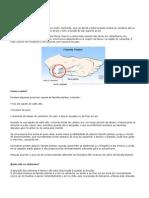 FASCITE PLANTAR.docx