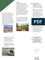 Desertificación.docx