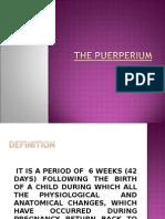 puerpurium