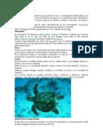 Ecorregiones Pulgar Vidal