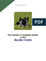 Border Collie Book007