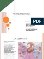 Funciones Fisiológicas de Las Hormonas Hipofisarias