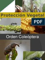 3.Orden Coleoptera 2015