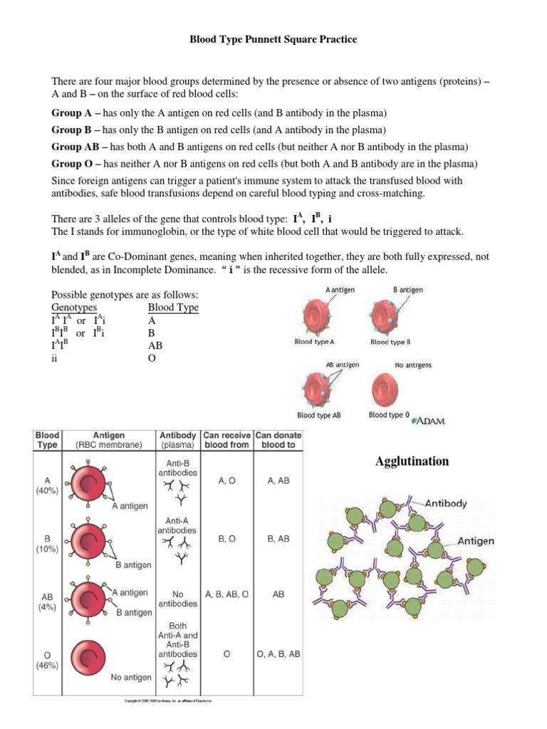 Worksheets Punnett Square Worksheet Answer Key blood type punnett square practice antibody