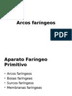 Arcos Faríngeos