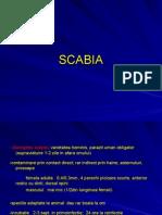 Scabie_G (1)