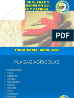 Manejo de Plagas y Enfermedades en Aji, Pimiento