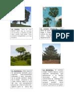 Plantas de Selva