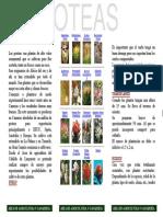 cultivo_de_las_proteas.pdf