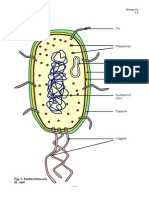 IB Biology Notes Prokaryotic Cells