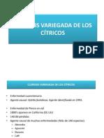 Clorosis variegada de los cítricos..pdf