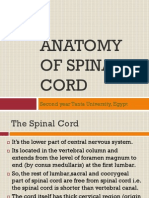 Anatomy of Spinal Cord