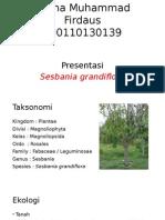 PPT AGROS - SESBANIA