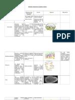 estructurayfuncindelosorganeloscelulares-120511170601-phpapp01
