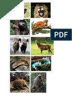 Animales Que Se Defienden Con Los Dientes, Garras, Cuernos, Veneno, Puas