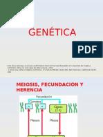 27-genetica