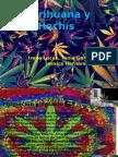 trabajo sobre las drogas