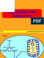 Oxidación Del Piruvato a Acetil CoA- C.K.