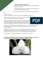 Plantas en Peligro de Extincion Guatemala