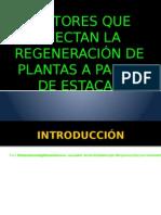 Factores Que Afectan La Regeneración de Plantas a Partir de Estacas