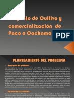 Proyecto Paco - copia.ppt