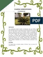 Las Plantas Gimnospermas