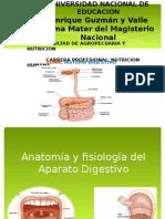 Sistema Digestivo Expo
