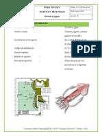 FICHA TECNICA FILETE SIN TRES PIELES.pdf