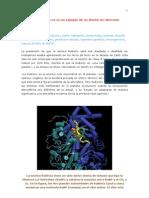 La enzima RuBisCo no es un ejemplo de un diseño sin dirección